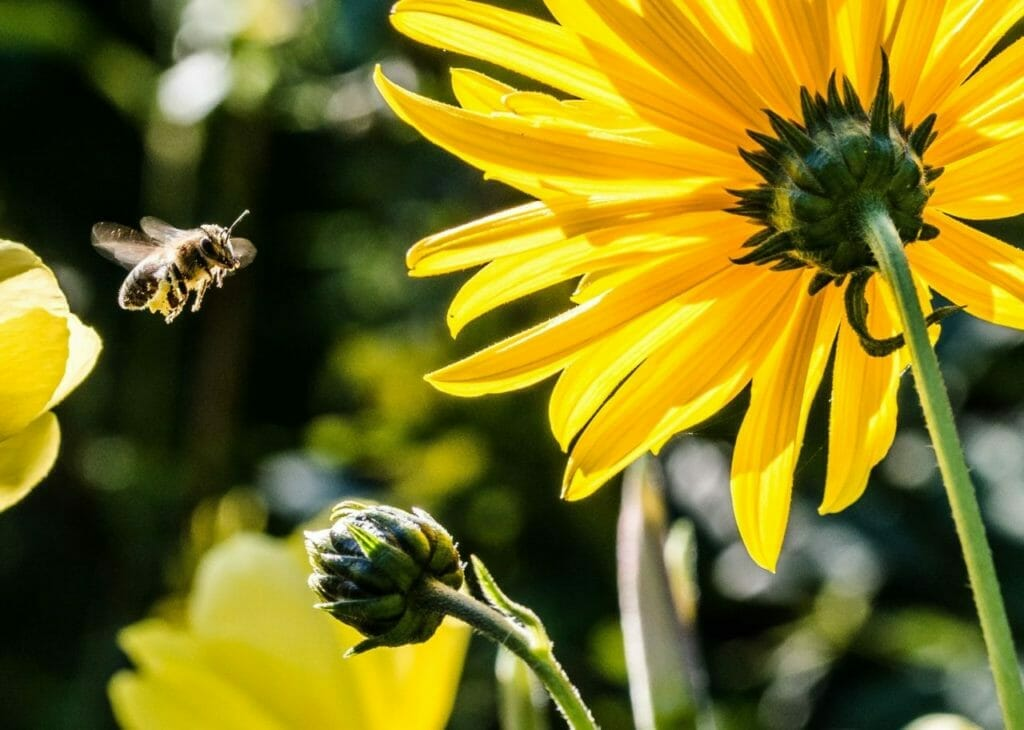 Help the bees land on your startup's windowsill with a compelling founder story